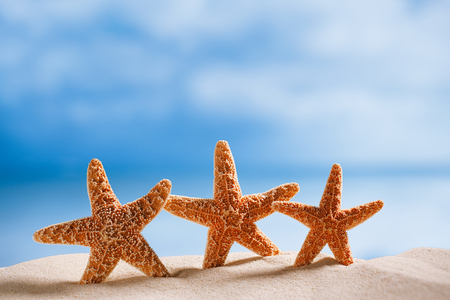 three starfish  with ocean , beach and seascape, shallow dof photo