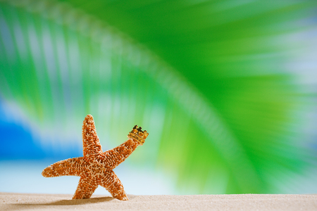 starfish  with crown, ocean , beach and seascape shallow dof photo