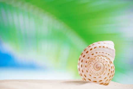 sea shell  with palm leaf , beach and seascapee, shallow dof photo