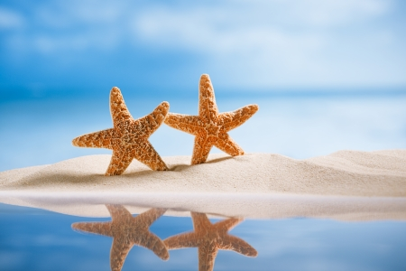 starfish  with ocean , beach, seascape and reflection, shallow dof photo
