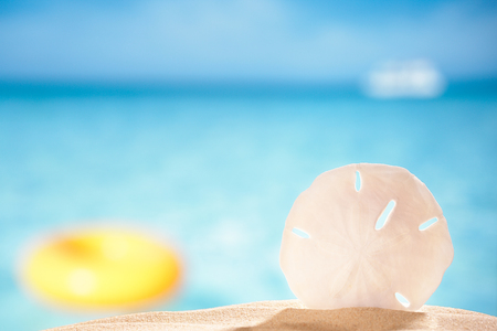 sand dollar: sand dollar shell on sea beach background, shallow dof Stock Photo