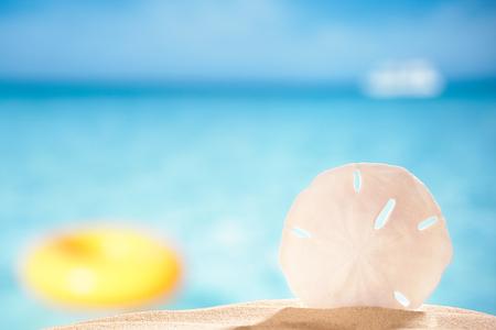 sand dollar: shell d�lar de arena en la playa del mar de fondo, dof bajo