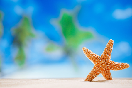 starfish  with ocean , beach and seascape shallow dof photo