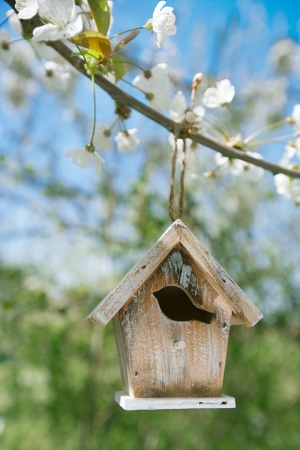 Little Birdhouse in Spring with blossom cherry flower sakura photo