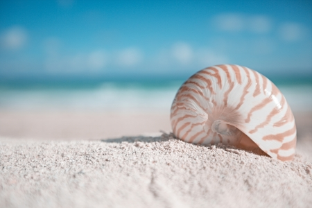 small nautilus shell with ocean,beach and seascape photo