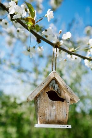 birdhouse: Little Birdhouse in Spring with blossom cherry flower sakura