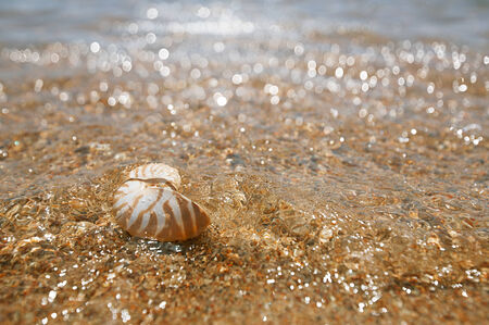 issyk kul: nautilus shell in the issyk-kul lake with glitter wave background