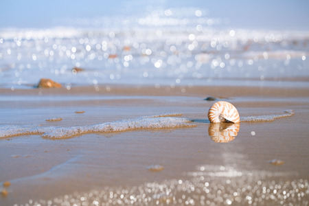 spume: nautilus sea shell with seafoam on Atlantic ocean Legzira beach, morocco