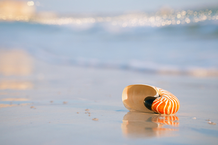 nautilus shell on a sea ocean beach sand with golden waves and reflection photo