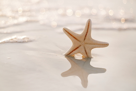 starfish on sea ocean beach in Florida, soft gentle sunrise light color photo
