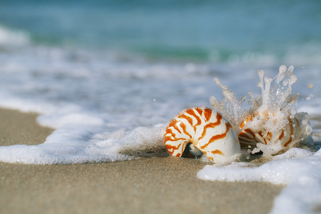 two nautilus shell with sea wave,  Florida beach  under the sun light, live action photo