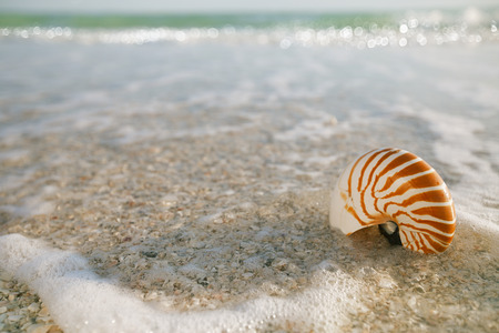 nautilus shell in ocean with waves under the sun light,  shallow dof photo