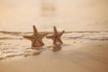 two starfish on sea ocean beach in Florida, soft gentle sunrise light color photo