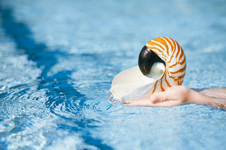 nautilus seashell in child hands with crystal blue water background, shallow dof photo