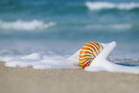 nautilus shell with sea wave,  Florida beach  under the sun light, live action photo