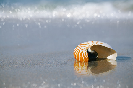 nautilus shell on white Florida beach sand under sun light, shallow dof photo