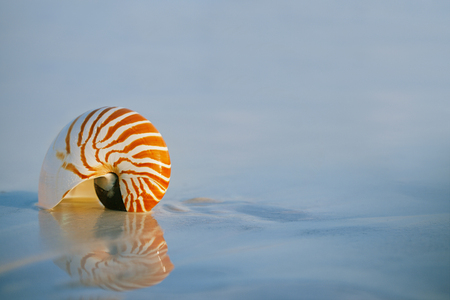 lovely nautilus shell on a still sea ocean beach  and reflection photo