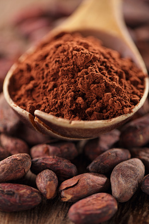 cocoa fruit: cocoa powder in spoon on roasted cocoa chocolate beans