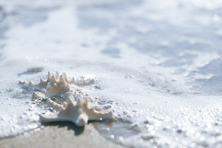 two starfish on sea ocean beach photo