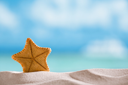 deepwater rare starfish with ocean , beach and seascape, shallow dof photo