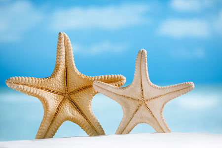 two giant starfish with white sand,  ocean , beach and seascape, shallow dof photo