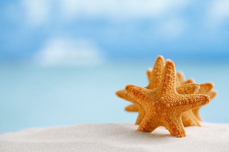 red starfish with ocean, beach, sky and seascape, shallow dof photo