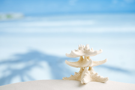 white starfish with ocean, beach, sky and seascape, shallow dof photo