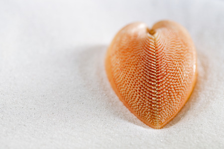 red heart sea shell in beach white sand, shallow dof photo