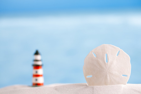 sand dollar: sand dollar shell on beach and sea and boat background, shallow dof