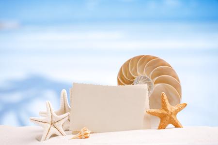 animal photo: shells and starfish with blank retro photo on white sand beach, sky and seascape, shallow dof