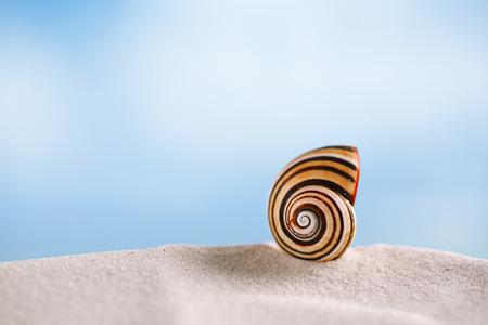 florida beach: bright polymita shell on white beach sand under the sun light, shallow dof