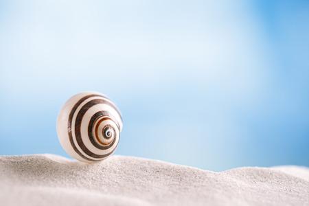 bright polymita shell on white beach sand under the sun light, shallow dof photo
