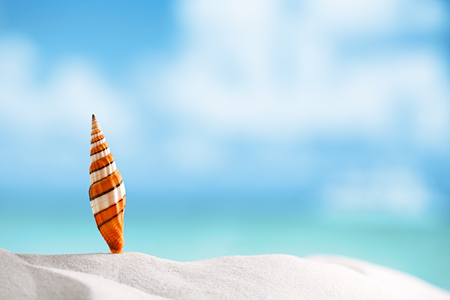 clown sea shell with ocean , beach and seascape , shallow dof photo
