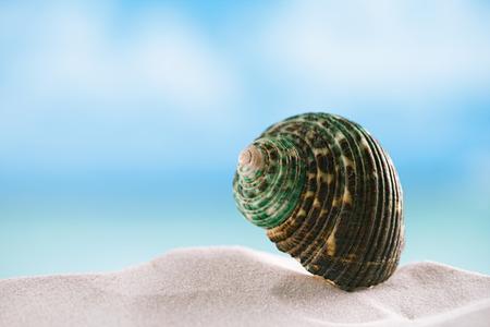green shell on white Florida beach sand under sun light, shallow dof photo