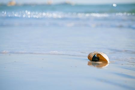 nautilus shell on white Florida beach sand under sun light, shallow dof photo