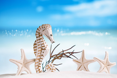 seahorse with red corals on white sand beach, ocean,  sky and seascape photo