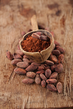 cocoa fruit: cocoa powder in spoon on roasted cocoa chocolate beans background