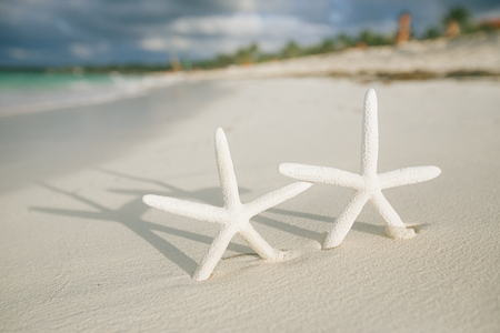 live action: white starfish in sea wave live action, blue sea and clear water, shallow dof