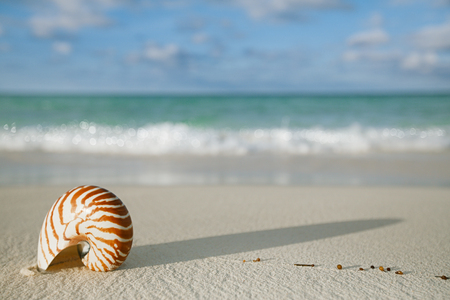 nautilus shell: nautilus shell on white beach sand, against sea waves, shallow dof