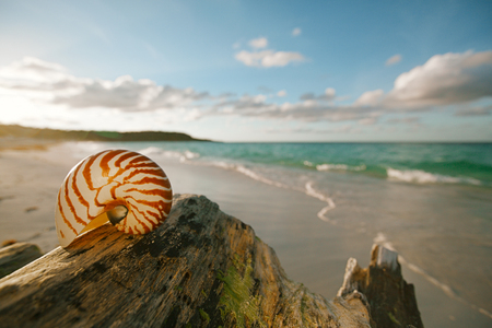 nautilus sea shell on golden sand beach with waves in  soft sunset light, shallow dof photo