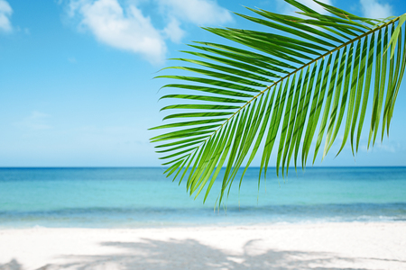 Palm leaf, blue sea and tropical white sand beach ander the sun photo