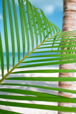 ander: Palm leaf, blue sea and tropical white sand beach ander the sun