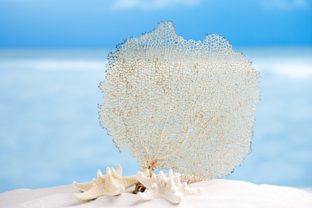 seafan: seafan and sea shell with ocean, beach, sky and seascape, shallow dof
