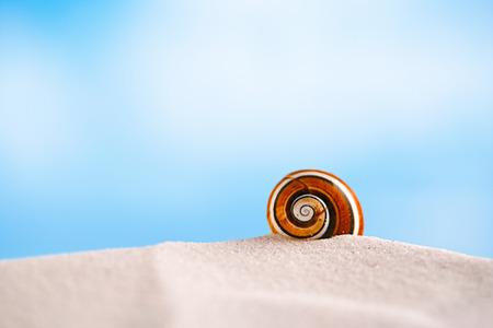bright polymita shells on white beach sand under the sun light, shallow dof photo