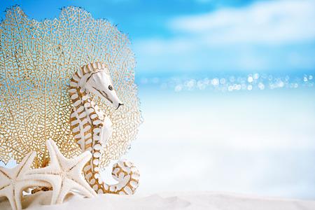 starfish beach: seahorse with white starfish on white sand beach, ocean,   sky and seascape, shallow dof