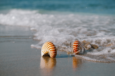 live action: two nautilus shell with sea wave,  Florida beach  under the sun light, live action