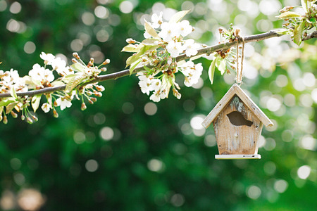 Little Birdhouse in Spring with blossom cherry flower sakura