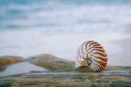nautilus shell: nautilus shell on white beach sand, against sea waves, shallow dof, soft focus