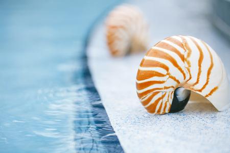 nautilus shell: nautilus shell at resort swimming pool edge,  shallow dof