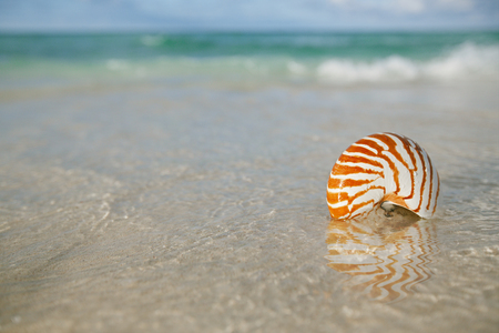 nautilus: nautilus shell on white beach sand, against sea waves, shallow dof, soft focus